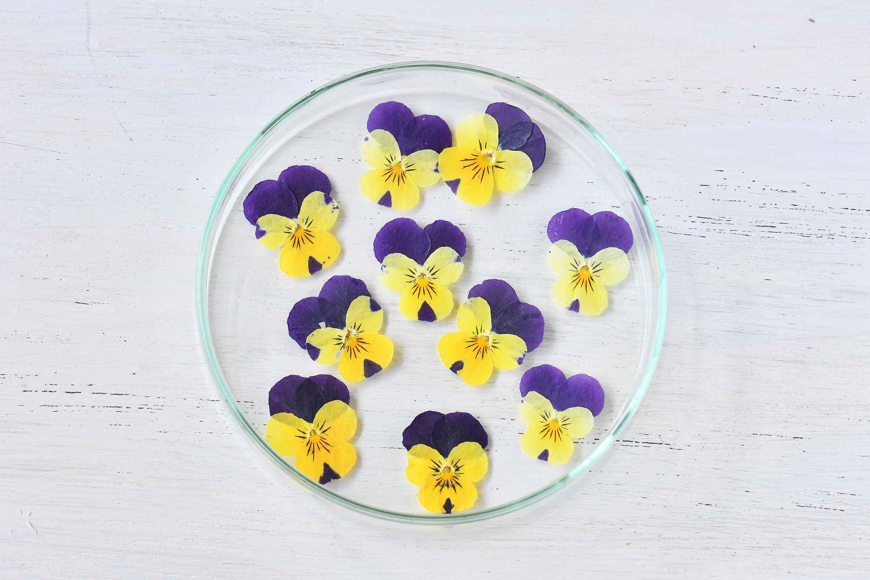 ビオラ黄紫10枚