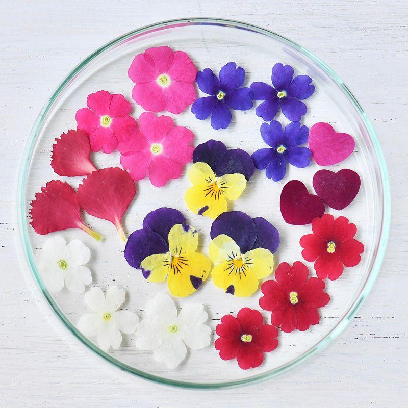 ドライ食用花の押し花7種類 各3枚OSHIBANAミックス21枚セット