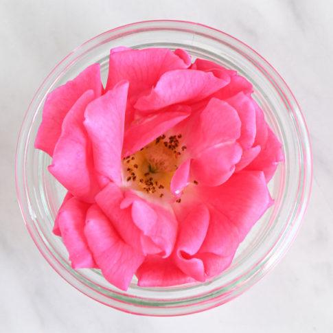 通年出荷 食用バラ八重咲きピンク 3輪セット